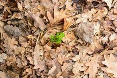 Fondo seco de las hojas de otoño Foto de archivo