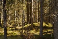 Fondo selvaggio del paesaggio della foresta Immagine Stock