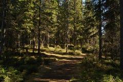 Fondo selvaggio del paesaggio della foresta Immagini Stock Libere da Diritti