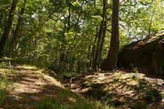 Fondo selvaggio del paesaggio della natura della foresta Immagine Stock