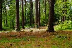 Fondo selvaggio del paesaggio della natura della foresta Fotografia Stock
