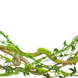 Fondo selvaggio torto dei rami delle liane illustrazione vettoriale