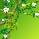 Fondo selvaggio torto dei rami delle liane Viti della giungla illustrazione vettoriale
