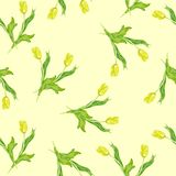 Fondo senza cuciture con le piante Tulipano dell'acquerello Immagini Stock
