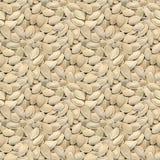 Fondo senza cuciture dei semi di zucca Fotografia Stock