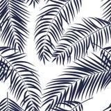 Fondo senza cuciture del modello della bella della palma siluetta della foglia illustrazione vettoriale