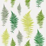 Fondo senza cuciture del modello di vettore di Fern Leaf Vector Fern Leaf Immagine Stock Libera da Diritti