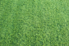 Fondo senza cuciture dell'erba verde Fotografia Stock