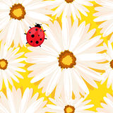 Fondo senza cuciture della primavera con i fiori della camomilla Vettore eps10 Fotografia Stock Libera da Diritti