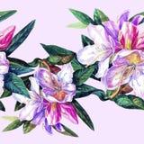 Fondo senza cuciture delle azalee dei fiori Immagini Stock