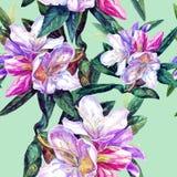 Fondo senza cuciture delle azalee dei fiori Immagine Stock