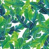 Fondo senza cuciture delle foglie di palma tropicali Fotografia Stock Libera da Diritti
