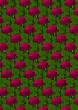 Fondo senza cuciture delle rose rosse su un fondo verde Fotografie Stock Libere da Diritti