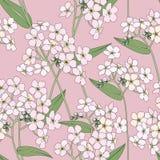 Fondo senza cuciture floreale. modello di fiore delicato. Fotografie Stock