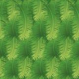 Fondo senza cuciture, foglie di palma royalty illustrazione gratis