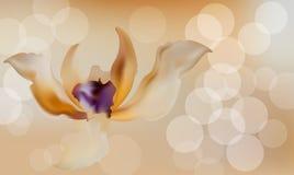 Fondo sfocato romantico del fiore sulla retro annata illustrazione di stock