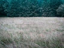 Fondo simple simple de la naturaleza del bosque y del prado del contraste bajo fotos de archivo libres de regalías