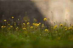 Fondo soñador con las flores y la hierba Foto de archivo