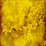 Fondo soñador de los springflowers imagen de archivo libre de regalías