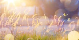 Fondo soleado abstracto del prado del otoño de septiembre del arte fotos de archivo