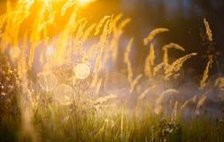 Fondo soleado de la naturaleza del otoño del arte Fotos de archivo