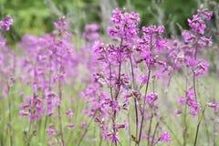 Fondo soleado del campo de flores del verano de la primavera de la naturaleza Foto de archivo libre de regalías
