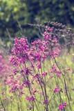 Fondo soleado del campo de flores del verano de la primavera de la naturaleza Imagen de archivo