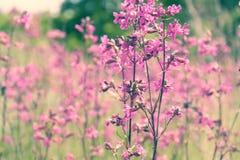 Fondo soleado del campo de flores del verano de la primavera de la naturaleza Imagen de archivo libre de regalías