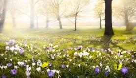 Fondo soleggiato astratto della primavera fotografia stock libera da diritti