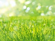 Fondo soleggiato della molla del prato dell'erba verde Fotografia Stock