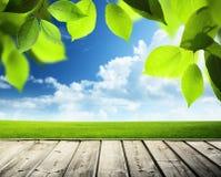 Fondo soleggiato della primavera fotografia stock libera da diritti