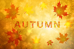 Fondo soleggiato dello spazio della copia di stagione di autunno illustrazione vettoriale