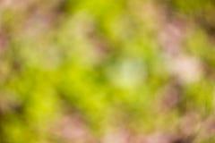 Fondo soleggiato naturale confuso di verde di calce Fotografia Stock Libera da Diritti