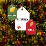 Fondo speciale di vendita di autunno Immagine Stock