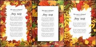 Fondo stagionale di autunno delle foglie variopinte Raccolta del collage Fotografie Stock