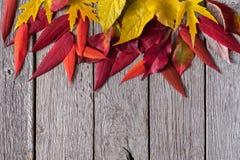 Fondo stagionale di autunno, foglie rosse della sorba e foglie di acero gialle Fotografia Stock