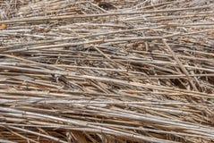 Fondo a strisce astratto naturale, struttura delle canne asciutte, erba asciutta, gambi secchi Fotografie Stock Libere da Diritti