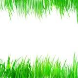 Fondo, struttura con le erbe realistiche Fotografia Stock Libera da Diritti