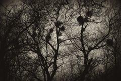 Fondo, struttura degli alberi misteriosi con i nidi Fotografia Stock Libera da Diritti