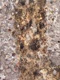 Fondo, struttura, vecchia, lerciume, annata, marrone, parete, astratta Immagini Stock Libere da Diritti