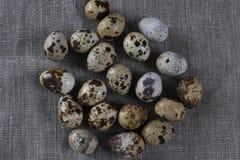 Fondo strutturato della molla con le piccole uova di quaglia Immagine Stock