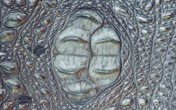 Fondo strutturato della pelle di coccodrillo Immagini Stock