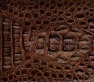 Fondo strutturato della pelle di coccodrillo Immagini Stock Libere da Diritti