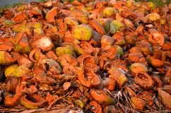 Fondo strutturato delle noci di cocco marroni in sole del subrise Fotografia Stock Libera da Diritti