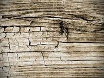Fondo strutturato dello scrittorio di legno d'annata stagionato del granaio del pavimento della plancia Immagine Stock