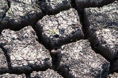 Fondo strutturato di superficie della Terra incrinata asciutta Immagine Stock