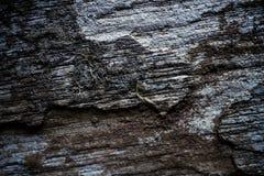 Fondo strutturato di vecchia parete di legno Immagini Stock