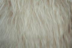 Fondo suave blanco de la textura de las lanas de las ovejas imagenes de archivo