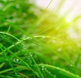 Fondo suave de la hierba verde Foto de archivo libre de regalías