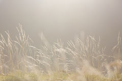 Fondo suave de la naturaleza de la luz de la mañana Imagen de archivo libre de regalías